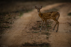 AFB-Pench 2016-1757