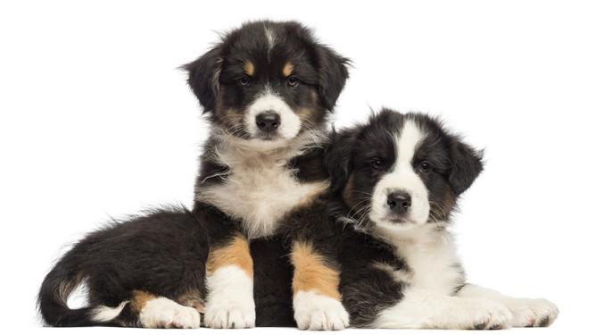 Se puede educar a un perro en 3 semanas