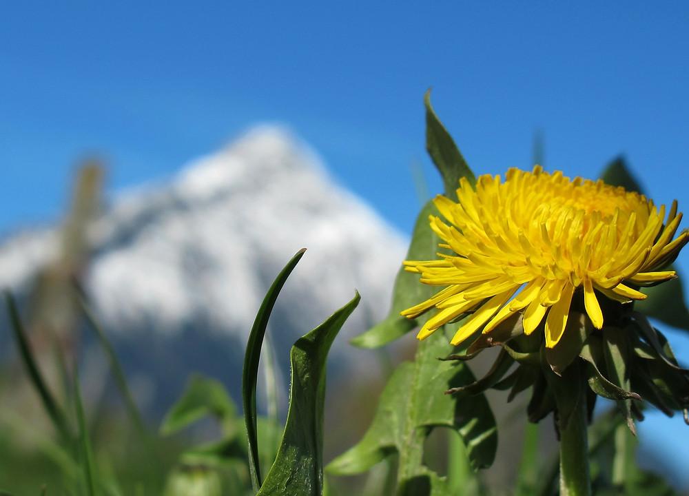 Le printemps, l'idée générale de l'été est la resplendissance - Hugues Beauvois