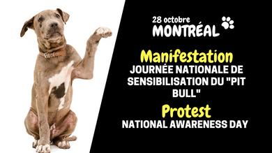 Une marche pour les droits des chiens de type Pit Bull aura lieu samedi!