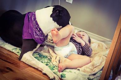 Sensibilisation : la relation entre le chien et l'enfant
