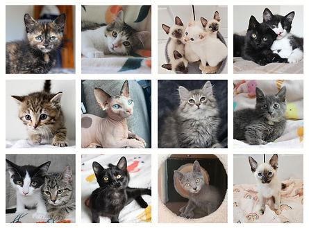 Calendrier mural Un chat à la fois 2022 (1)_edited.jpg