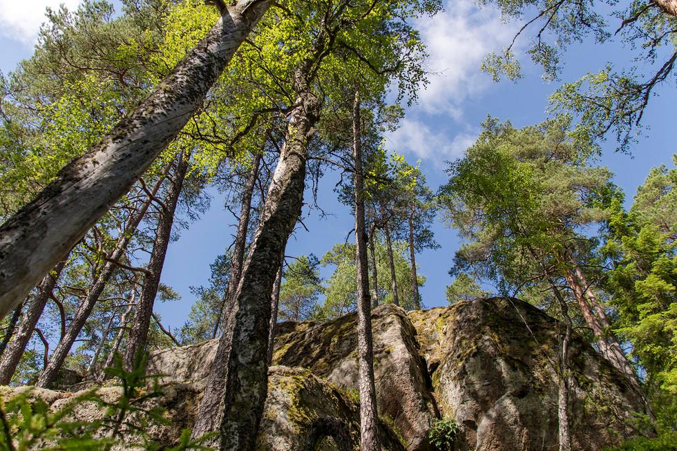 Nationalpark Tiveden