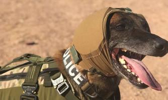 Exército dos EUA está desenvolvendo melhor proteção auditiva para seus cães