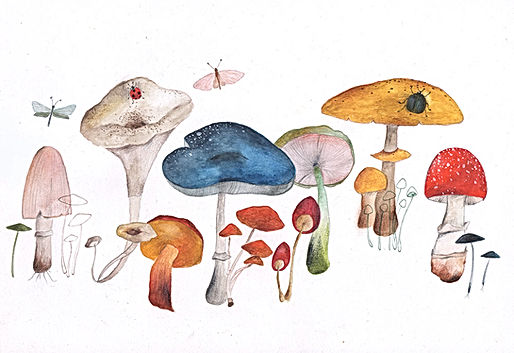 mushrooms forest forestlife magical witchcraft fairy tale paddenstoel sprookje heks magie bos botanisch botanical nature natuur