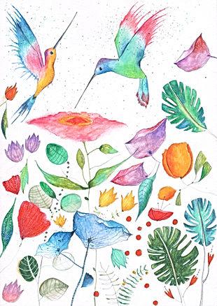 amnesy international bekkin en blitz birds humming birds botanical illustration nature childrens illustration watercolor ink postcard kaart