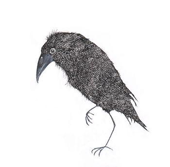 kidlit raven raaf ink inkt wildlife fairy tale sprookje picture book childrens book illustration illustrator ink inkt