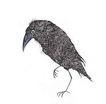 kidlit raven raaf ink inkt wildlife fairy tale sprookje picture book childrens book illustration illustrator ink inkt