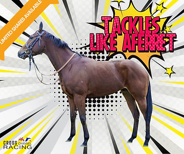 Tackles Like Aferret mited shares availa