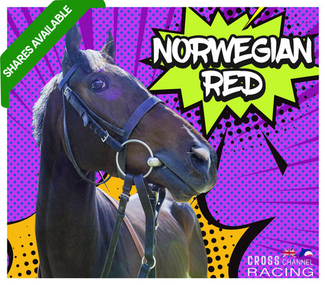 Norweigan Red shares available .jpg