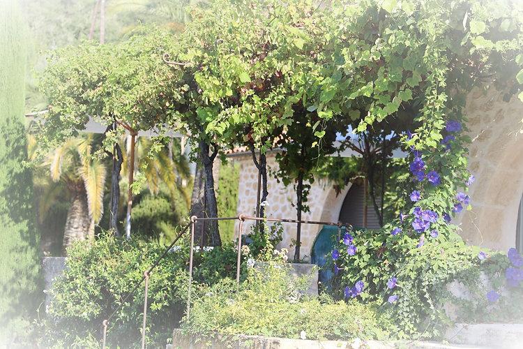jardin 3 (2).JPG