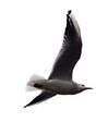 oiseau 1.png