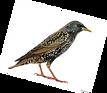 oiseau 5.png