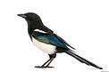 oiseau 7.png