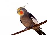 oiseau 4.png