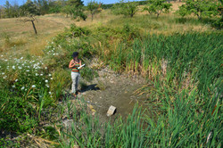 Délimitation de zones humides