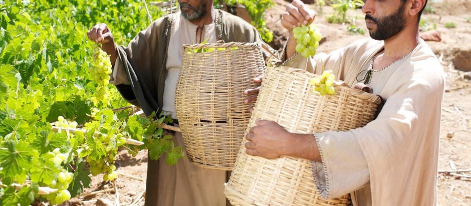 La vid verdadera y el fruto de la salvación