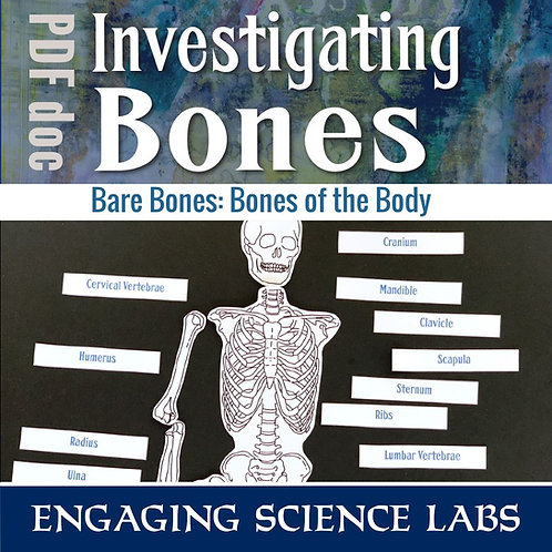 Human Body: Skeletal System Activity, Learn Major Human Bones