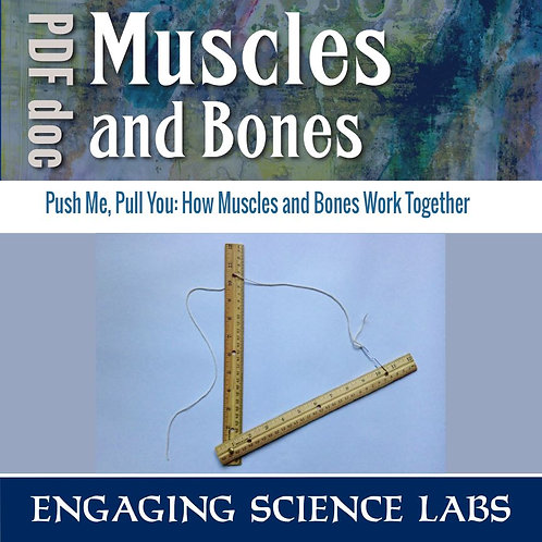 Bones and Muscles: How They Work Together, a Hands-On Lab