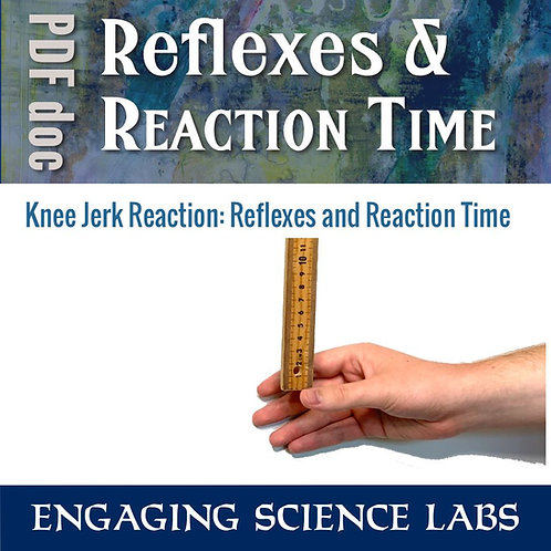 Reaction Time: A Simple Method to Measure It