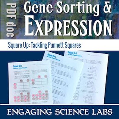 Punnett Square Activity Worksheets—Gene Sorting and Expression