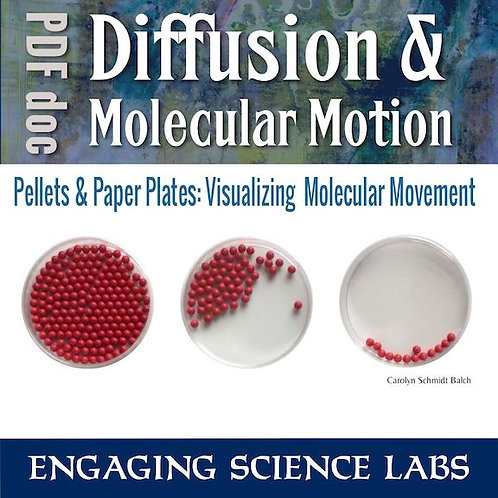 Diffusion Lab: Visualizing Molecular Movement Using a Model