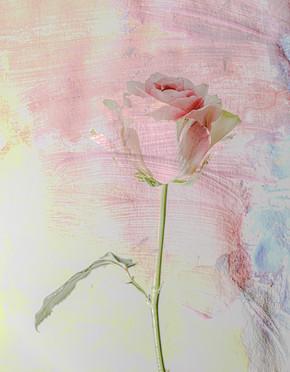 Grethe Lindseth Picasso
