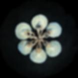 Screen Shot 2019-10-22 at 12.23.58.png