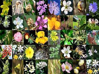 floraia.jpg