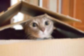 catinabox.jpg.653x0_q80_crop-smart.jpg