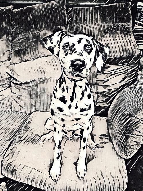 Black Liver Spotted Dalmatian Print