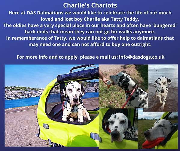 Charlie's Chariots Here at DAS Dalmatian