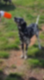 Possum  1.jpg