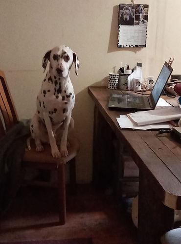 Devon desk.jpg