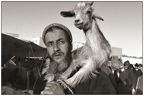 BerberShepard.jpg