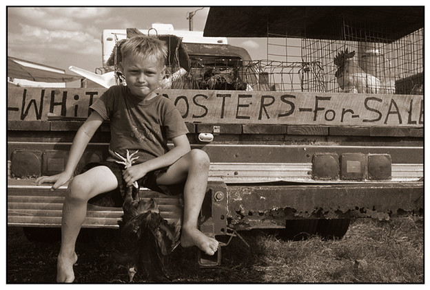 Cody's Roosters