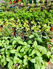 plantes .png