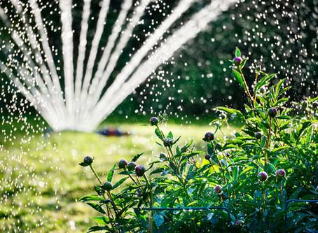 Jak neplýtvat vodou na našich zahradách