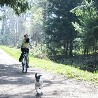 Cyklostezka - pes s cyklistou .jpg