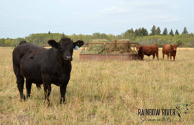 15H & red bulls-2020Sept20_edited-1-LQ.j