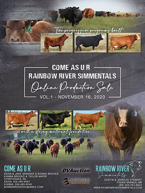 Rainbow River Simmentals Online Production Sale