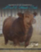 Rainbow River Simmentals 4th Annual Bull & Female Sale