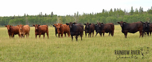 Bred Heifers-2020Aug14-DSC_7582_narrow_L