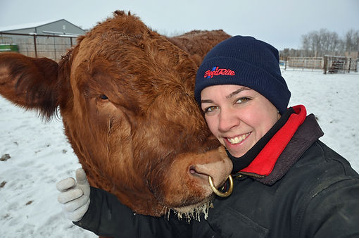 Rainbow River Simmentals, purebred red Simmental bull