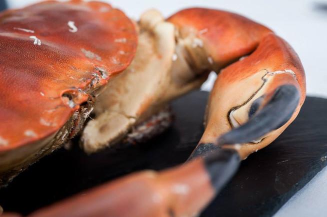 Dartmouth crab