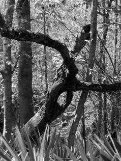 Forest Language