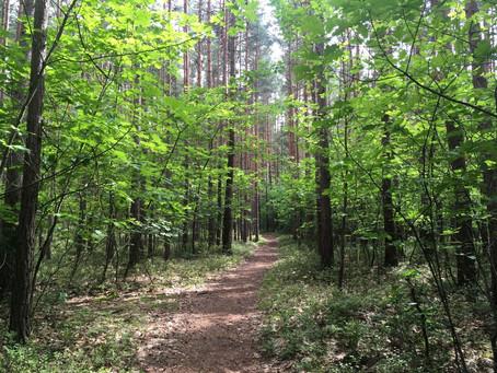 Proč je dobré chodit na procházku sám