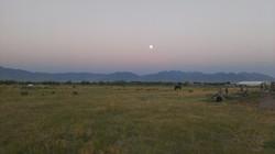 Pegasus pasture