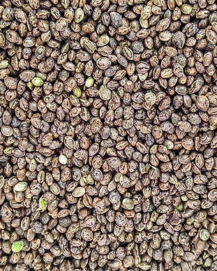 Copy of Copy of seeds (2) (1).JPG