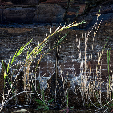 Grass - Tankwa Karoo.jpg